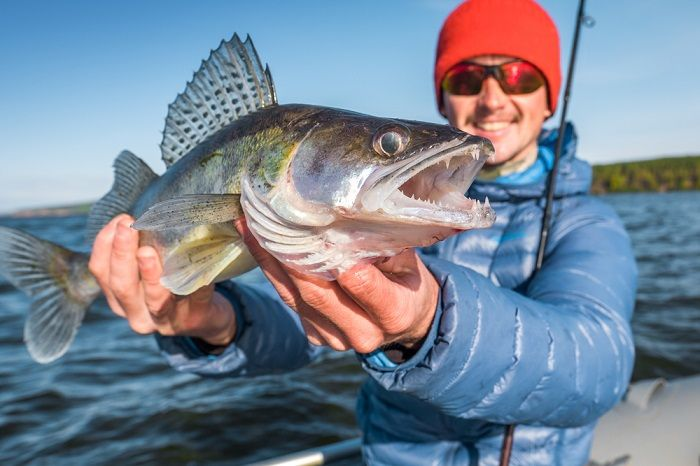Walleye-fishing-tips