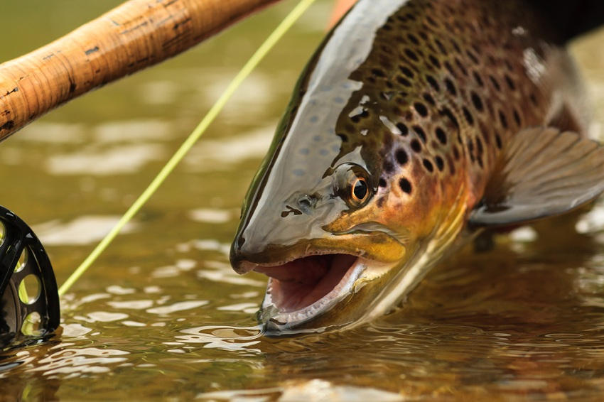 Spring Trout Beginners Guide